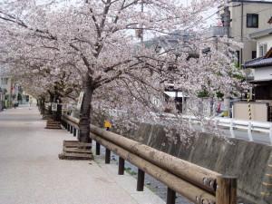 辰野川沿い